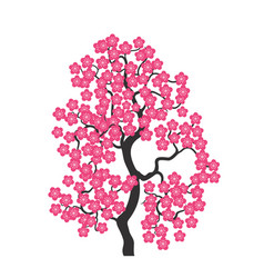 cherry blossoms vector image vector image