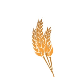 Ears of wheat isolated on white background vector image