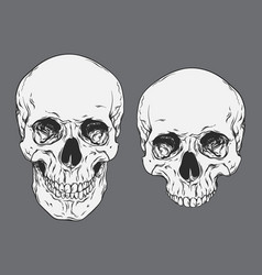 Line art human skulls set isolated vector