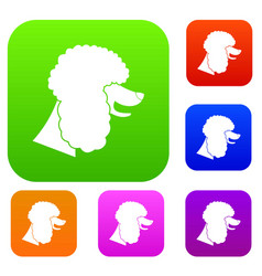 Poodle dog set collection vector