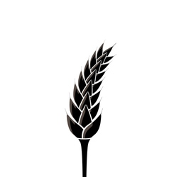 Black silhouette of spikelet of wheat isolated on vector