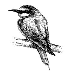 Bee-eater bird doodle hand drawn vector