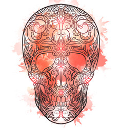 Contour of a sugar skull wit vector