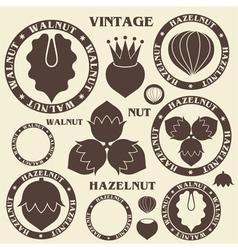 Nut hazelnut walnut vector