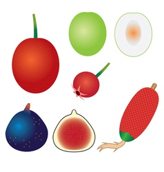set of exotic fruits vector image vector image