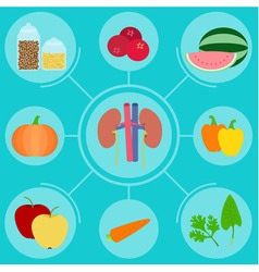 Infographics of food helpful for healthy kidney vector