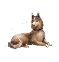 Brown mongrel watercolor of brown mongrel vector