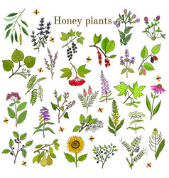 plants - nectar sources for honey bees vector image vector image