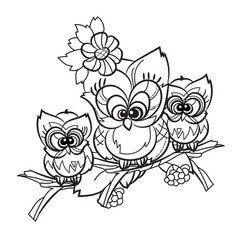 pretty owl on tree branch vector image