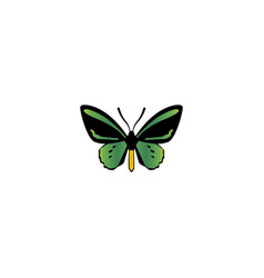 Realistic beauty fly element vector