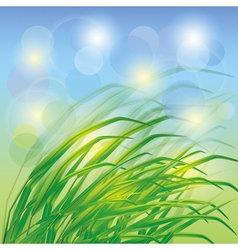 Spring background with fresh green grass vector image