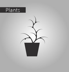 black and white style icon flower in pot aloe vector image vector image