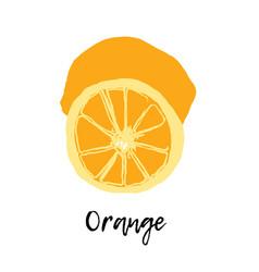 orange isolated fruit drawing vector image