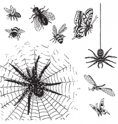 set of antique insects engravings vector image