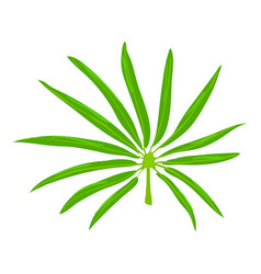 Paml leaf icon cartoon style vector