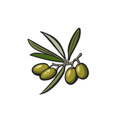 olive oil logo icon isolated vector image