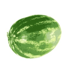 Ripe watermelon isolated on white background vector