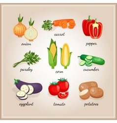 Vegetables ingredients vector image vector image