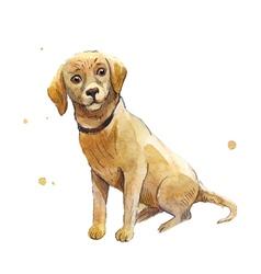 lobrador dog vector image