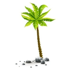 Isolated tropical coconut palm vector image vector image