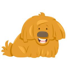 hairy dog animal character vector image