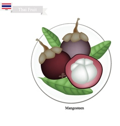 Purple mangosteens a famous fruit in thailand vector