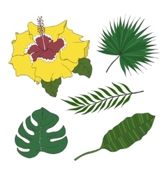 Set of leaves different species palm trees and vector image