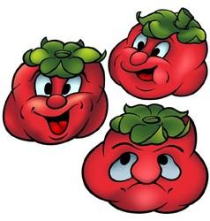 Three tomatoes vector