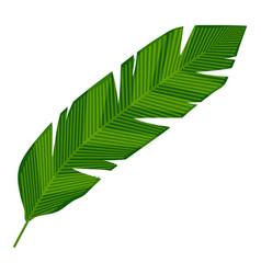 Banana leaf icon cartoon style vector