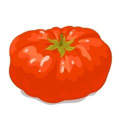 Big tomato 1 vector image