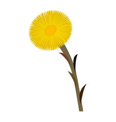 Coltsfoot clip art isolated vector