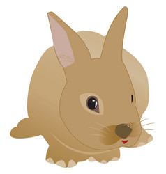 Highly details cute looking rabbit vector