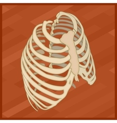 Human thorax flat isometric icon vector image