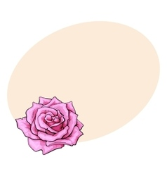 Deep pink rose top view isolated sketch vector