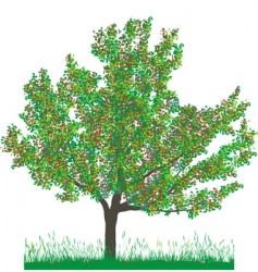 Cherry tree in summer vector