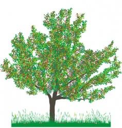 Cherry tree in summer vector