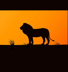silhouette lion on the background of sunset vector image