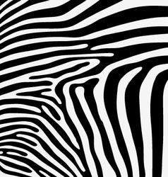 Skin of zebra vector