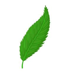 Leaf icon cartoon style vector