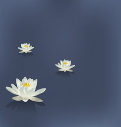 Three flowers of a lily in the lake on a blue vector