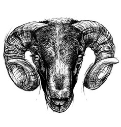 ram head drawing line work vector image vector image