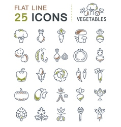 Set flat line icons vegetables vector