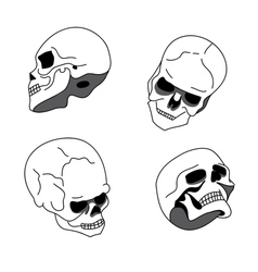 Skull in different positions vector