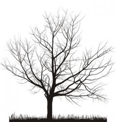 Cherry tree in winter vector