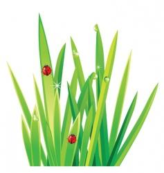 ladybirds on grass vector image