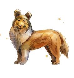 Shetland Sheepdog vector image vector image