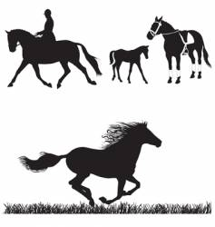 Horse collection vector