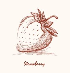 strawberries vector image vector image