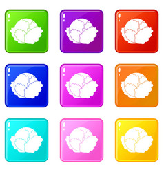 Cabbage icons 9 set vector