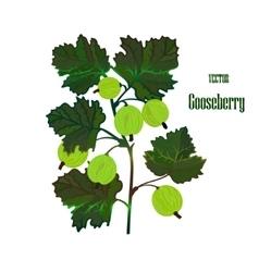 Gooseberry branch vector